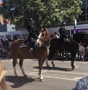 Royal Wedding Parade Horses