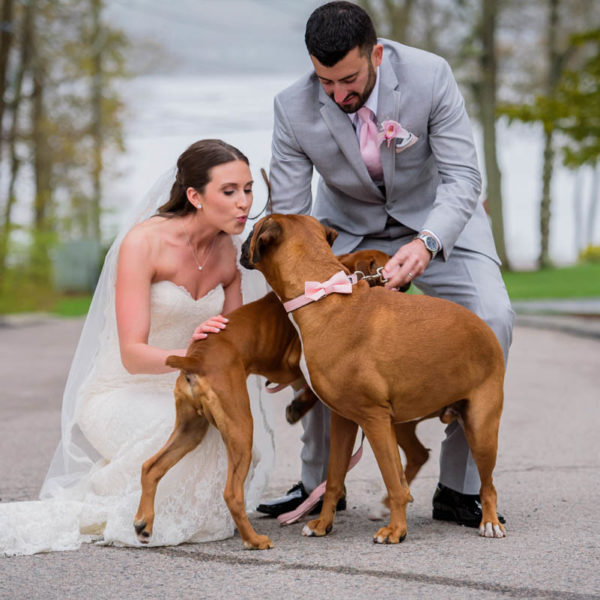 boxer dogs at wedding
