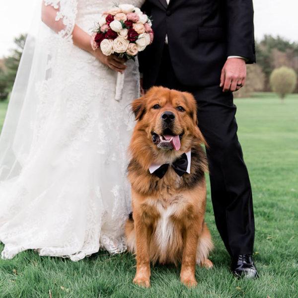 dog in bowtie wedding
