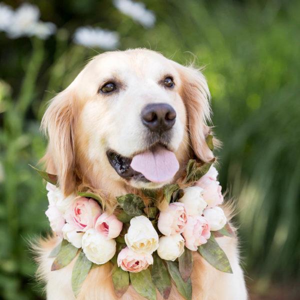 dog flower collar for wedding
