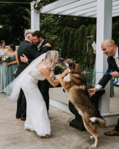 dog jumps up on bride