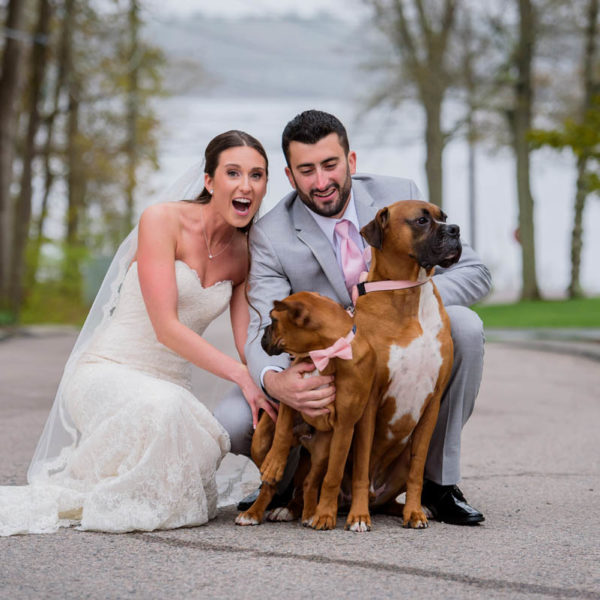 wedding couple with two dogs