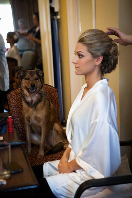 getting-ready-dog.jpg