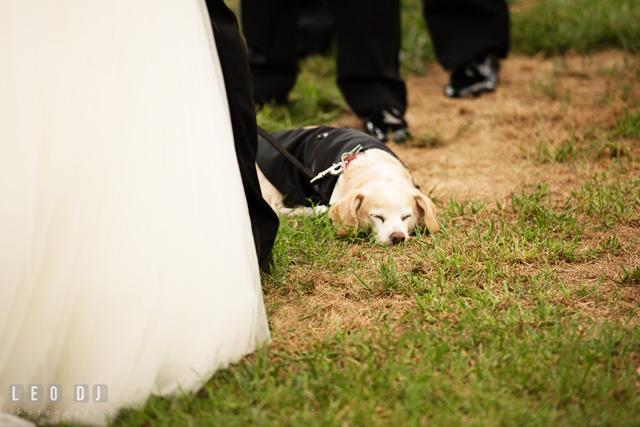 hilarious wedding photos (5).jpg