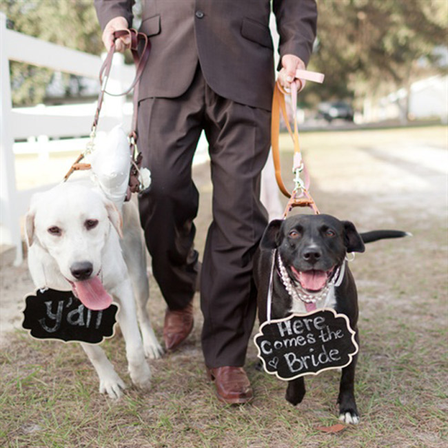 dogs-with-signs.jpg