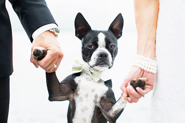 pretty wedding pet photos (8).jpg