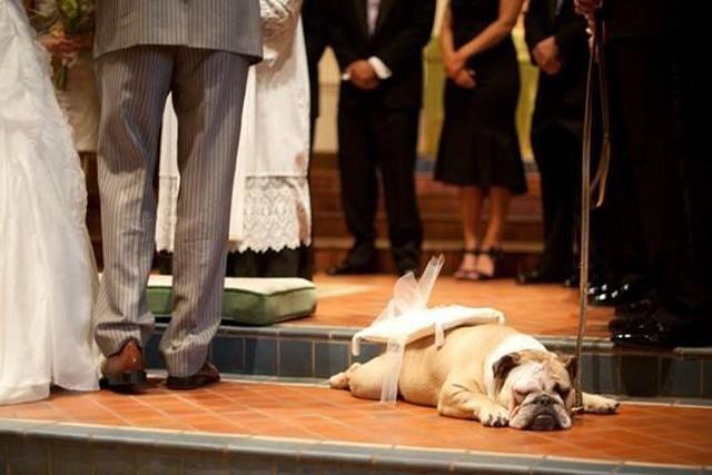 hilarious wedding photos (2).jpg