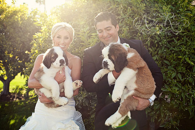 ashley-rose-dogs-with-couple.jpg