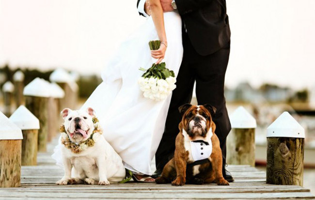 pet-in-wedding-18-bull-dogs.jpg
