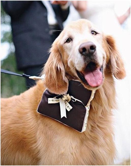 Dog-ring-bearer.jpg