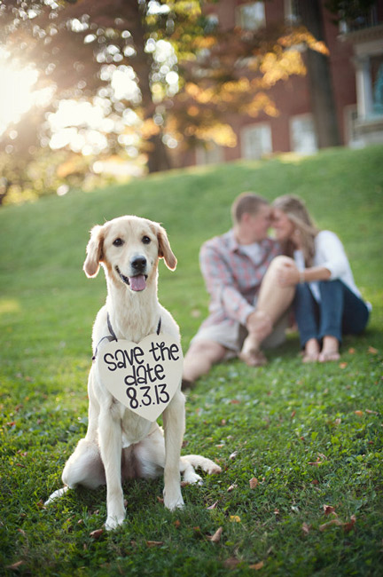 save-the-date-dog.jpg